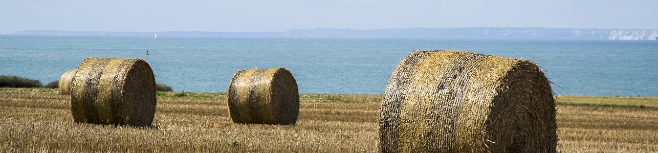 Hayfields on the North Calais Coast, France