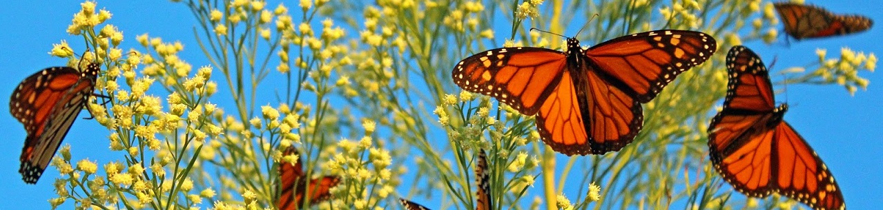 http://www.karenbrown.com/wp-content/uploads/2015/01/banner-mexico-monarch-migration-2013.jpg
